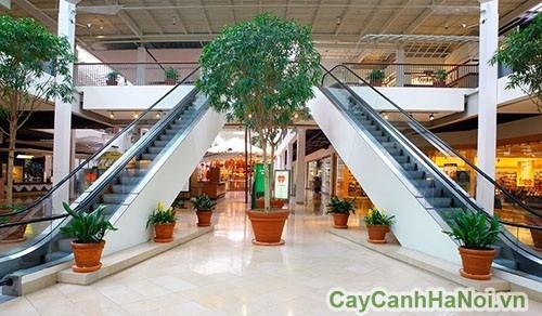 Không gian thêm xanh với dịch vụ cho thuê cây cảnh