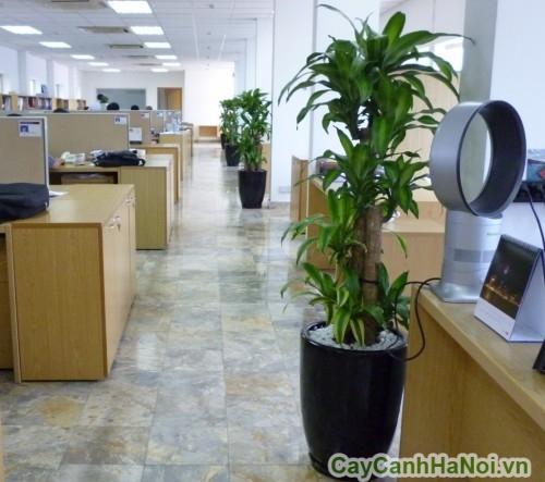 Dịch vụ cho thuê cây cảnh bao gồm tư vấn chọn cây