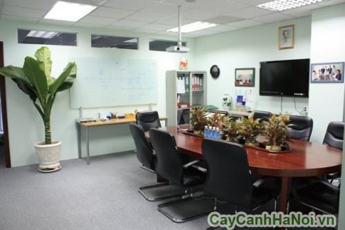 Dịch vụ cho thuê cây cảnh chuyên nghiệp và chu đáo