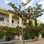 Cây bàng - loại cây công trình phổ biến
