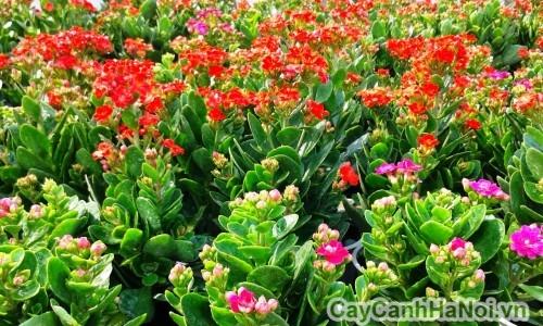 Hoa sống đời có rất nhiều màu sắc