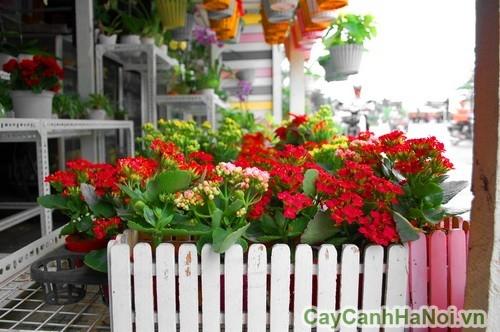 Vẻ đẹp nổi bật của hoa sống đời