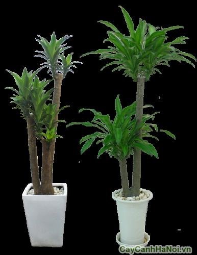 Số lượng thân cây khác nhau tùy mục đích của người chơi cây