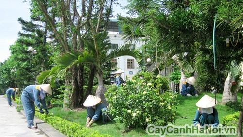 Một phần trong dịch vụ chăm sóc cây xanh
