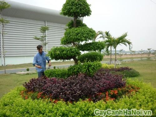 Cây sẽ luôn phát triển tốt nhờ dịch vụ chăm sóc cây xanh