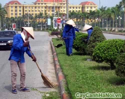 Chăm sóc cây xanh trong đô thị