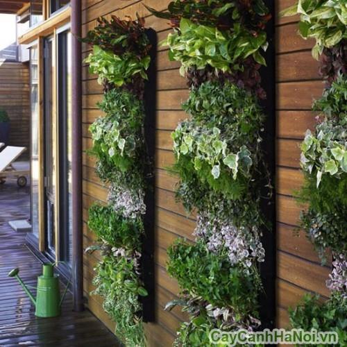 Có thể trồng xen nhiều loại cây trong vườn thẳng đứng