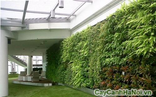 Cần xác định vị trí của bức tường để lựa chọn loại cây phù hợp