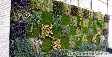 Vườn thẳng đứng tạo nên sự phá cách trong không gian