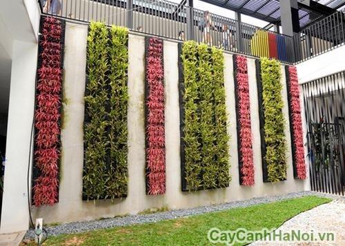 Các mảng màu rực rõ của vườn tường