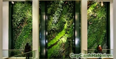 Vườn tường giúp tăng vẻ đẹp cho không gian