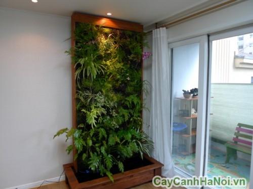Vườn tường - Giải pháp cho không gian hẹp