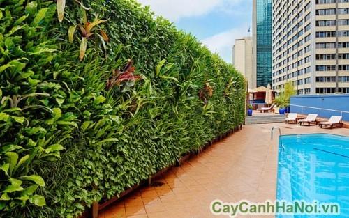 Vườn tường trong không gian bể bơi