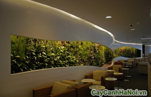 Vườn tường trong quán cafe