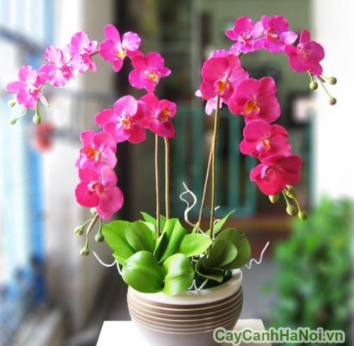 Hoa lan là loại cây cảnh tết mang đầy nét sang trọng