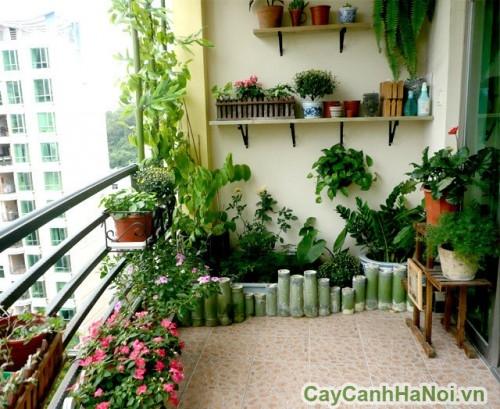 Nên chọn những loại cây dễ sống để trồng ở ban công
